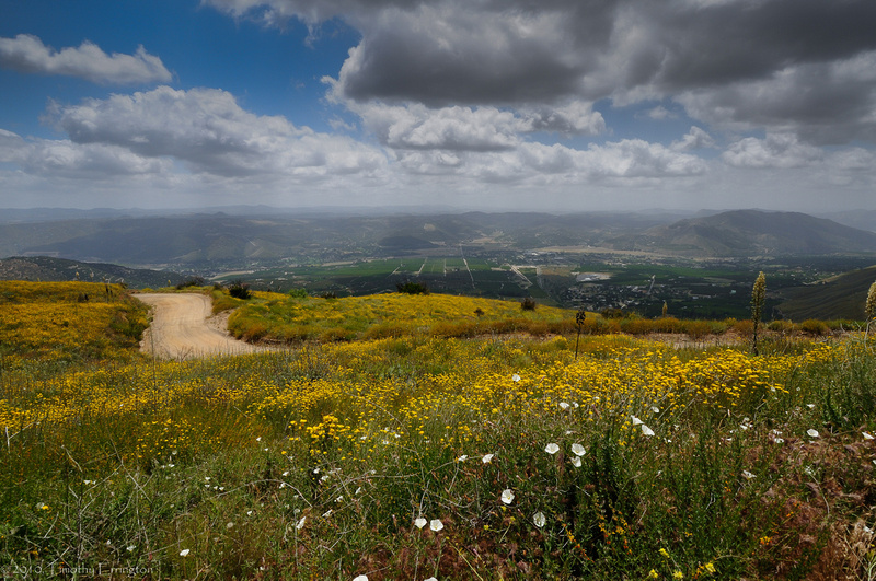 Mt. Palomar